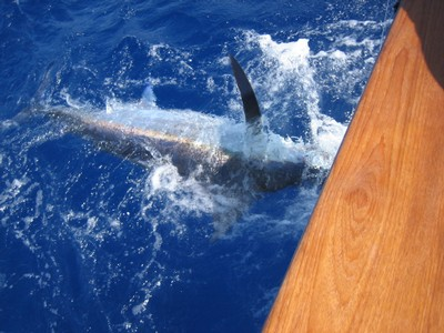 costarica marlin fishing - small