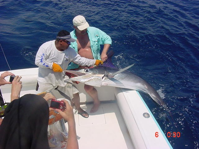 SPORT FISHING IN FLAMINGO - big
