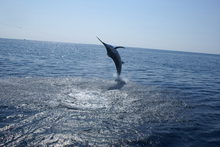 Sport Fish Catch with Costa Rica Fishing Charter based out of Flamingo - Guanacaste Costa Rica4 - big