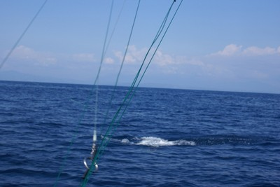 Sport Fish Catch with Costa Rica Fishing Charter based out of Flamingo - Guanacaste Costa Rica6 - small